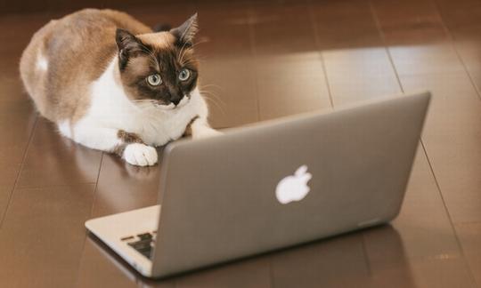 PCデータ猫 フリー